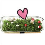 We Love Fridays, Earth Week Edition: DIY Terrarium Kit