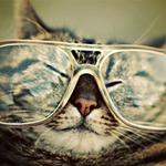 Top 10 Best Cat Videos