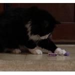 Robotic Cat Toys by HexBug