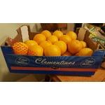 Maroc Clementines