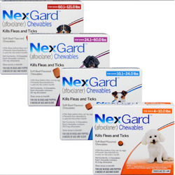 Nexgard flea and tick medication
