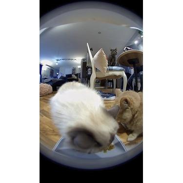 Instachew 2 Smart Automatic Pet Feeder