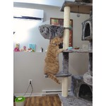 PAWZ Road Multi-Level Floor to Ceiling Cat Tree