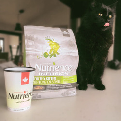 Nutrience Infusion Healthy Kitten - Chicken