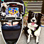 Graco pace travel system