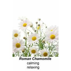 Organic Greenie Baby Calming Lotion with Roman Chamomile - Pabaren Free!