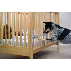 PetSafe Pawz Away Indoor Dog Barrier
