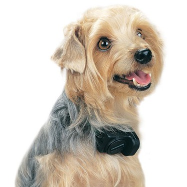 PetSafe Ultralight Sonic No Bark Dog Collar