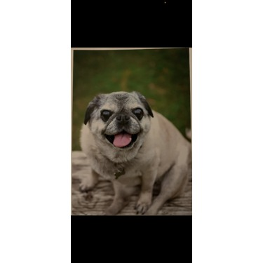 Purina One Smartblend Dog Food Reviews In Pet Products
