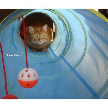 Flexible Cat Tunnels