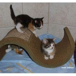 Petlinks Wave Scratcher