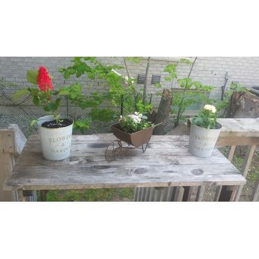 Home Depot Garden Center Reviews In Misc Chickadvisor