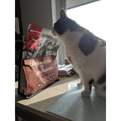Orijen Cat Food