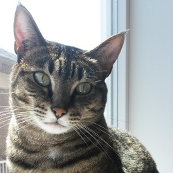 Meow Mix Cat Food
