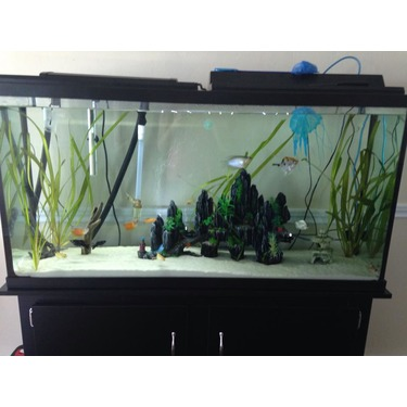 Marineland Fish Tanks