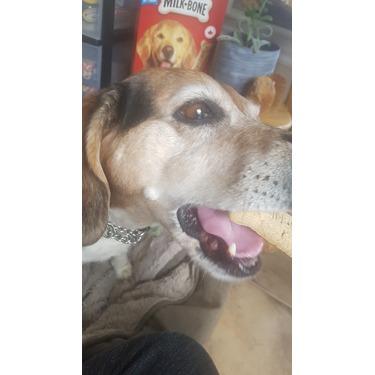 Milk Bone Original Biscuits for Large Dogs
