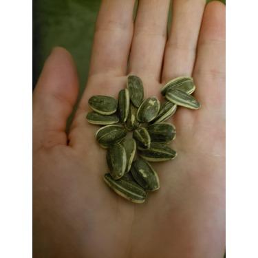Spitz seasoned sunflower seeds