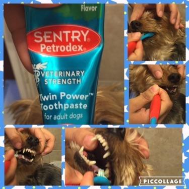 SENTRY Petrodex Veterinary Strength Adult Dog Dental Kit