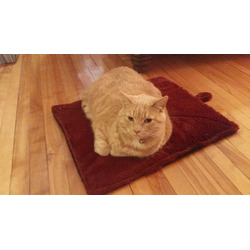 Thermal Pet Mat and Bed - Snuggly Non-Electric Heated Pad -Thermo-Reflective Core - Cozy Self Warming for Cats Dogs and Pets