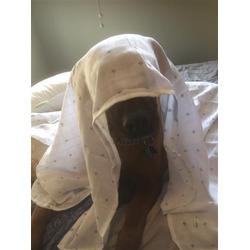 Ziggy Baby Muslin Swaddle Blanket