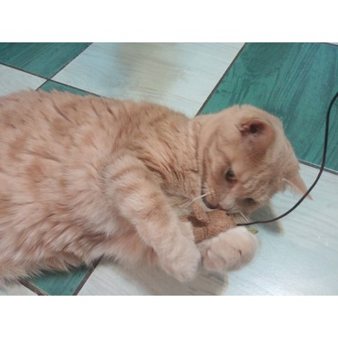 OVO Cat Mouse Teaser Toy