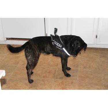 Go-Dog Dog Mount Harness for Go-Pro Cameras