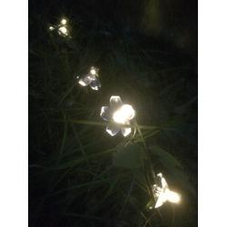 Innoo Tech Outdoor Solar String Lights 21ft 50 Led Blossom Flower Fairy Lights
