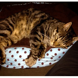 EchoAcc Detachable Dot Pet Bed Nest