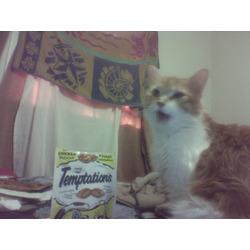 Temptation Turkey Cat Treats 180 grams
