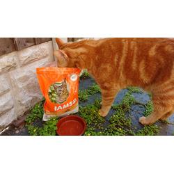Iams proactive health - healthy adult cat food