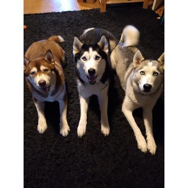 Performatrin adult large breed dog food