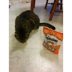 Temptations Tantalizing Turkey Flavour Cat Treats