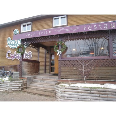 Calactus Cafe Restaurant Vege
