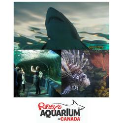 Ripleys Aquarium (Toronto)